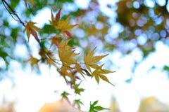 Autumn leaf background Stock Image