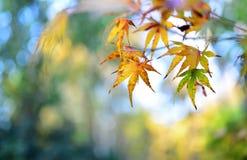 Autumn leaf background Stock Photography