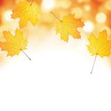 Autumn leaf background. Stock Images