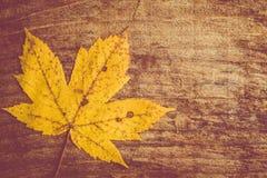 Autumn leaf background Stock Photo
