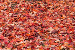 Autumn Leaf Background XXXL Arkivbilder