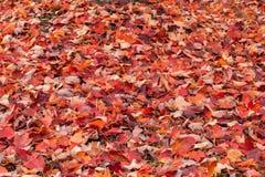 Autumn Leaf Background XXXL Stock Images