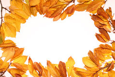 Autumn leaf backgrounds Stock Photography