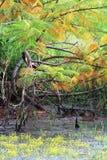 Autumn Leaf Backgrounds Stock Photo