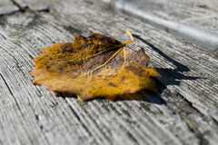 Autumn leaf on bench Stock Image
