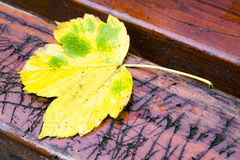 Autumn leaf on bench Stock Images
