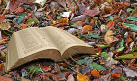 Autumn leaf bible Royalty Free Stock Photography