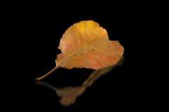 Autumn leaf on black background Royalty Free Stock Images