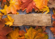 Autumn leaf on blue wood background top view Royalty Free Stock Image
