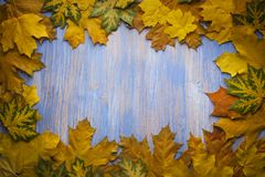 Autumn leaf on blue wood background top view Stock Image
