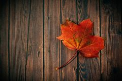 Autumn, Leaf, Board Stock Image