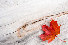 Autumn Leaf. A leaf in autumn in the board Royalty Free Stock Images