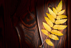 Autumn leaf on the boards Royalty Free Stock Photo