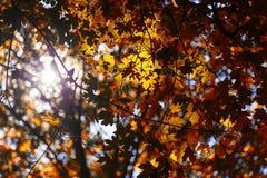 Autumn leaf bokeh background sun Stock Photos