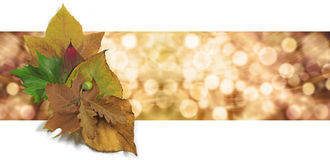 Autumn Leaf Bokeh Website Banner Lizenzfreie Stockfotografie
