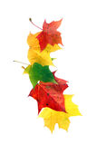 Autumn leaf border. Isolated on white royalty free stock images