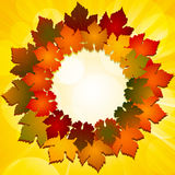 Autumn leaf border Stock Photo