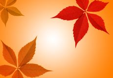 Autumn leaf border Stock Images