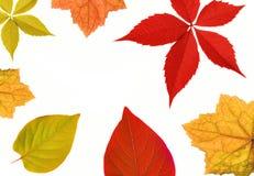 Autumn leaf border. Isolated on white background Royalty Free Stock Photo