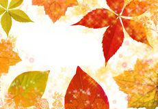 Autumn leaf border Stock Photos