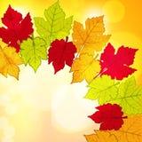 Autumn leaf border background2 Royalty Free Stock Photo