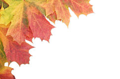 Autumn leaf border edge on white Stock Photos