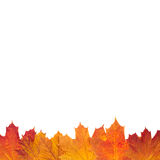 Autumn leaf border Royalty Free Stock Photography