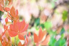 Autumn leaf branch royalty free stock photo
