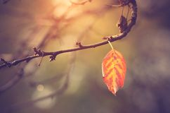 Autumn leaf on branch, vintage view Stock Image