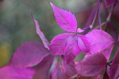 Autumn leaf branch royalty free stock photos