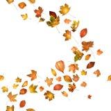 Autumn Leaf Breeze Stock Images