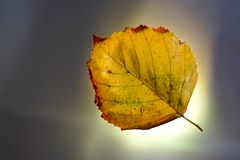 Autumn Leaf On Bright Background stock foto's