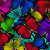 Autumn Leaf Butterflies piled up together in the beautiful color Stock Photography