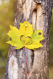 Autumn leaf with carved heart Royalty Free Stock Photo