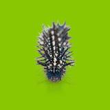 Autumn Leaf caterpillar Stock Image