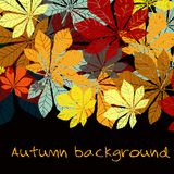 Autumn leaf chestnut collection. Vector EPS silhouette Stock Photos
