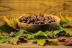 Autumn leaf and   chestnuts on  wooden table Stock Photography