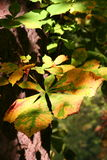 Autumn leaf with chiaroscuro Stock Photo