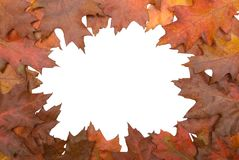Autumn leaf circular border Royalty Free Stock Photos