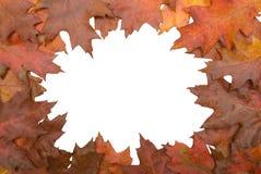 Autumn leaf circular border royalty free stock photos
