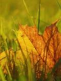 Autumn leaf close-up Stock Images