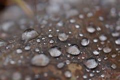Autumn leaf close up. Stock Photo