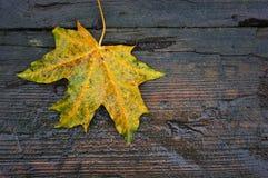 The autumn leaf Stock Image