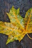 The autumn leaf Royalty Free Stock Photos