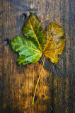 The autumn leaf Stock Images