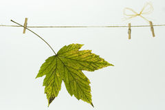 Autumn leaf on a clothes line Royalty Free Stock Photos