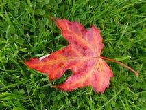 Autumn leaf in clover stock photos