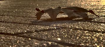 Autumn leaf on the cobblestones. The substrate below the text Royalty Free Stock Images