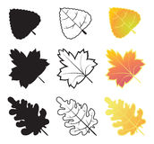 Autumn leaf collection Stock Photography