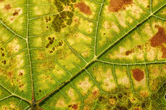 Autumn leaf color Royalty Free Stock Image